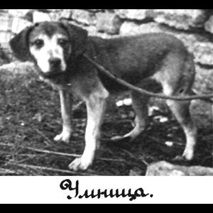 Umnitza