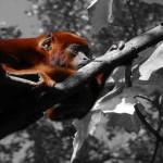 Istraživanje: Primates in research